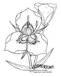 Mandevilla Flower Coloring Pages