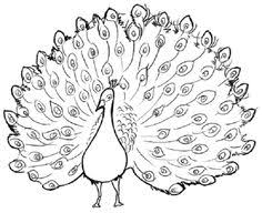 Realistic Peacock Coloring Page