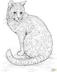 Leopard Cat Coloring Pages Free
