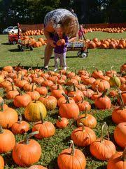 Pumpkin Patch Near Greenville Nc by What U0027s The Deal With Methodists And Pumpkins