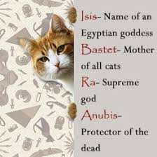 cat names unique cat names with their meaning