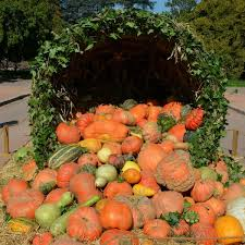 Pumpkin Patches In Oklahoma by 12 Pumpkin Patch Orlando Area Kevin Durant Donates 1