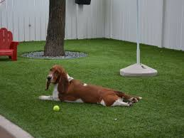 Carpet Grass Florida by Pet Turf Artificial Grass For Dogs Orlando Florida