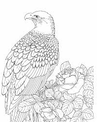 Bald Eagle Coloring Page Free Printable Pages For Kids