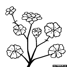 Gladiolus Flower Online Coloring Page Gypsophila Baby