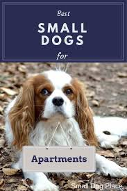 Dogs That Dont Shed Or Bark by Best 25 Best Small Dogs Ideas On Pinterest Small Dogs Cutest