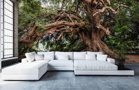 olivenbaum auf fototapete