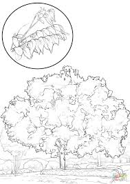 Click Pecan Tree Coloring Pages Page Trunk Frog Of Life