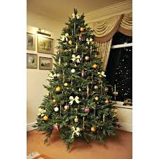 Tall Skinny Christmas Tree The Woodland Pine Real Type