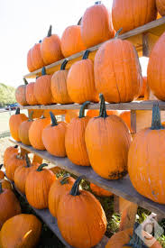 Pumpkin Patch Greenbrier Arkansas by Pumpkin Patches Corn Mazes U0026 Hay Rides Nashville Guru