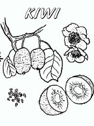 Kiwi Coloring Pages To Download And Print For Free