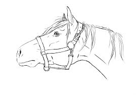 Coloring Pages Of Real Horses Best Cute Realistic Horse Head S Pertaining To