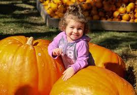 Pumpkin Patches Around Dayton Oh by Farmers Report U0027beautiful Bountiful U0027 Ohio Pumpkin Crop The Blade