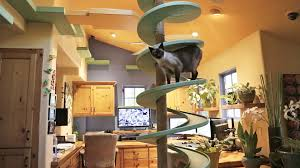 cat in house turns his house into indoor cat playland and our hearts