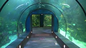 After 2 years of renovations new Moody Gardens aquarium set