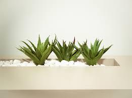 pflanzen für ein gutes raumklima im büro wohn journal