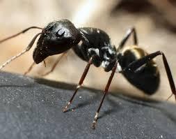 Ants In Kitchen internetunblock internetunblock