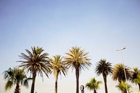 California Tumblr Photography Palm Trees Wallpaper WSW2025193