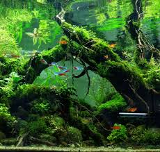 Ijoh - Tinton Aryo Putro Yudhanto #plantedtank #aquascape ... Aquascape Of The Month June 2015 Himalayan Forest Aquascaping Interesting Driftwood Placement Aquascapes Pinterest About The Greener Side Aquascaping Design Checklist Planted Tank Forum Simons Blog Decoration Bring Nature Inside Home Ideas Downhill By Arie Raditya Aquarium 258232 Aquaria Creating With Earth Water Fire Air Space New Aquascapemarch 13 2016page 14 Page 8 Aquapetzcom Magical Youtube 386 Best Tank Images On Aquascape