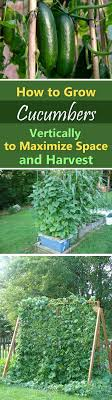141 Best Grow Plants Images On Pinterest   Agriculture, Backyard ... Diy Small Backyard Ideas Archives Modern Garden Recent Blog Posts Move Smart Solutions Blog Drone Defence Vr Gear Sneaky Flying Drones Want To Snoop Your Backyard Bkeepers Are Buzzing Wlrn Defend Territory In Turret Defense Game How Ppare Your Survive Winter Readers Digest June 2015 Thegenerdream Weeds Honey Bees Love My Adventures Bkeeping Buzzing Abhitrickscom 25 Ways To Seriously Upgrade Familys 13 Things Landscaper Wont Tell You Spring Is With Bees Rosie The Riveters