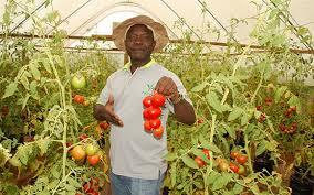 Types Of Pumpkins Grown In Uganda by Facom Uganda Farming Consult U0026 Management Co