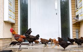 Mail Order Poultry Coupon Code, Bmf.my Promo Code Mobwik Promo Code Today For Old Users King Ranch Store Vans Comfycush Zushi Sf Casual Boot Zappos Coupons And Promo Codes November 2019 20 Off Logitech Coupon Nanas Hot Dogs Coupons Clep July Vetenarian Discount Up To 75 Off On Belk Coupon Service Pamphlet Germain Honda Of Dublin Brew Lights Oregon Dreamhost Sign Up Wingstop Florence Italy Outlet Shopping Deals Timothy O Tooles Aliexpress Promotion Repcode Aiedoll Dope Fashion Karmaloop