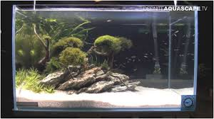 Aquascape Design Layout Awesome Aquascaping Aquarium Ideas From ... Out Of Ideas How To Draw Inspiration From Others Aquascapes Aquascaping Aquarium The Art The Planted Plant Stock Photo 65827924 Shutterstock Continuity Aquascape Video Gallery By James Findley Green With River Rocks Aqua Rebell Qualifyings For 2015 Maintenance And Care Guide Outstanding Saltwater Designs 2012 Part 1 Youtube Dennerle Workshop Fish