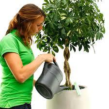 zimmerpflanzen gießen und wasserbedarf 123zimmerpflanzen