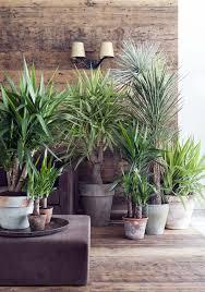 pflanzenfreude de zimmerpflanzen balkon pflanzen