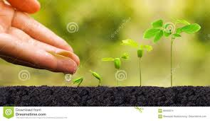 100 Seedling Truck Plant Seedling Stock Photo Image Of Fertilizer Fresh