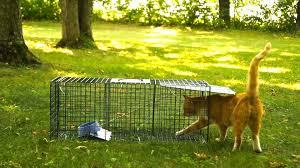 live cat trap advantek live trap for cat raccoon opossum and armadillo value
