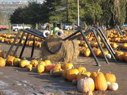 Pumpkin Patch North Austin Tx by Best 25 Spooner Farms Ideas On Pinterest Seattle Places To