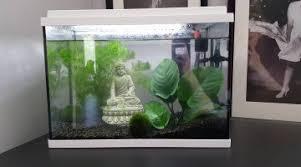 quels poissons pour un aquarium de 15l