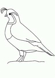 Quail Outline Coloring Page More