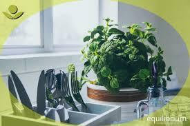11 kräuter in der küche wachsen