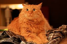 orange cat names cat names for orange cats and cats gallery