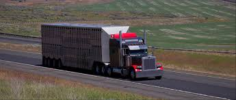 Reliable Truck Transport Service - Hopf Trucking LLC In Huron, SD ... Hshot Trucking Pros Cons Of The Smalltruck Niche Livestock Haulers May Receive Another Extension For Eld Rules Producers And Feedlots Are Facing A Trucker Shortage Mc Bdouble Transport Driver Jobs Australia Fleet Says It Acted Within Law In Denying Job To With Experienced Truck Fmcsa Clarifies Guidance Horse Haulers Topics Senate Passes Bill Exempting Livestock From Hinde Exports Livestock Plants Goods Ireland Uk Italy Cattle Driving Best Image Kusaboshicom Thomas Hauling Home Facebook