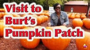 Del Oso Pumpkin Patch Lathrop Ca by Dell U0027osso Pumpkin Patch Offers Much Than Just Pumpkins Youtube