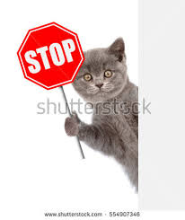 cat stop cat stop sign isolated on stock photo 557017396
