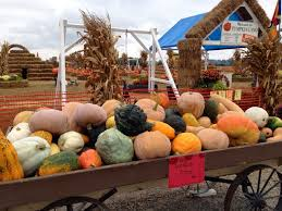 Pumpkin Patches Maryland Heights Mo by A St Louis Realtor U0027s Adventures Tips And Finds Just For Fun