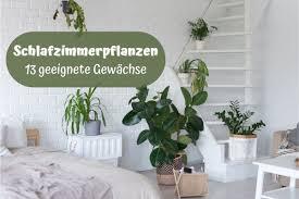 pflanzen für das schlafzimmer welche zimmerpflanzen eignen