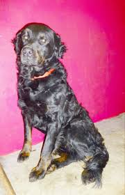 The Shed Maryville Tn Facebook by 64 Best Black And Brown Us Lost Dog Registry Images On Pinterest