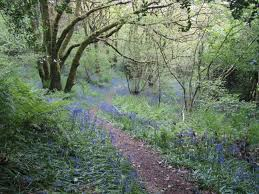 British Carpet by Free Images Landscape Tree Nature Forest Path Walking