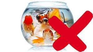 aquarium poisson prix le site du poisson l aquarium pour poisson
