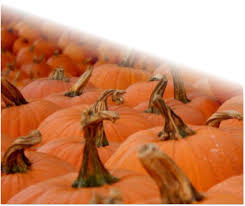 Oak Glen Pumpkin Patch Yucaipa by Pumkin Patch Inland Empire Pumpkin Farm Redlands U Pick Holloween
