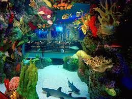 7 Underwater Restaurants And Bars Around The World - Photos ... I Really Want A Jellyfish Aquarium Home Pinterest Awesome Fish Tank Idea Cool Ideas 6741 The Top 10 Hotel Aquariums Photos Huffpost Diy Barconsole Table Mac Marlborough Tank Stand Alex Gives Up Amusing Experiments 18 Best Fish Images On Aquarium Ideas Diy Clear For Life Hexagon Hayneedle Bar Custom Tanks Ponds Designs For Freshwater Modern 364 And Tropical Ov Cylinder 2