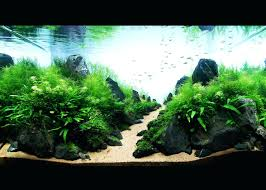 Aquascape Setup – Homedesignpicture.win How To Set Up An African Cichlid Tank Step By Guide Youtube Aquascaping The Art Of The Planted Aquarium 2013 Nano Pt1 Best 25 Ideas On Pinterest Httpwwwrebellcomimagesaquascaping 430 Best Freshwater Aqua Scape Images Aquascape Equipment Setup Ideas Cool Up 17 About Fish Process 4ft Cave Ridgeline Aquascape A Planted Tank Hidden Forest New Directly After Setting When Dreams Come True