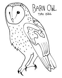 Barn Owl Colouring Page By ProjectOWL