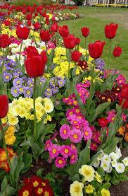 Best 25 Flowers garden ideas on Pinterest