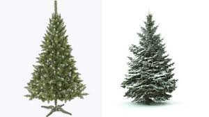 Which Christmas Tree Smells The Best Uk by Christmas Trees Real Or Fake Bbc News
